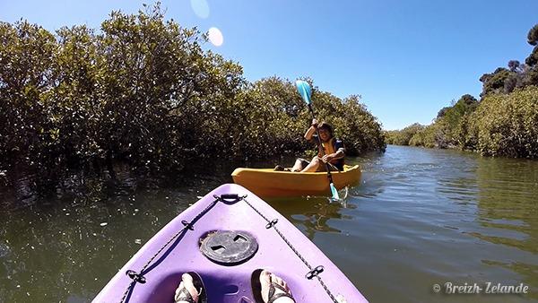 kayak-mangawhai-mangrove