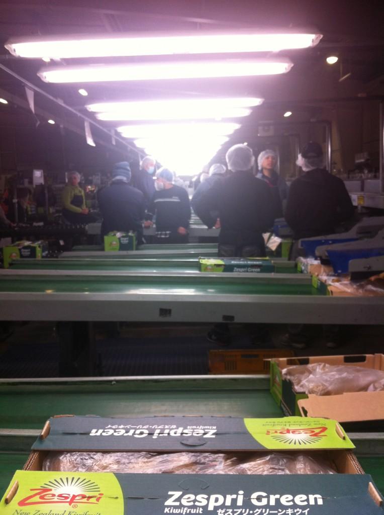 Kiwis Zespri Green - Packhouse
