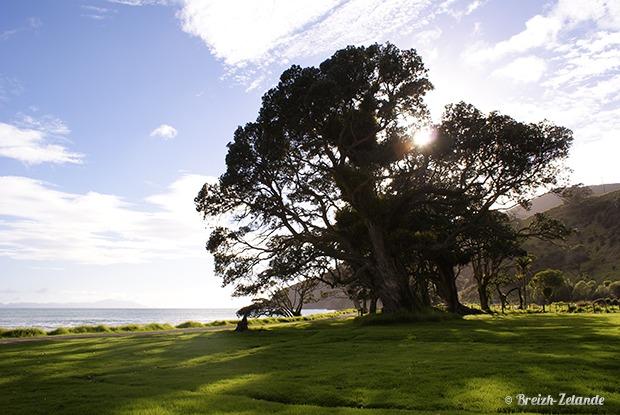 Stony-Bay-Coromandel-paysages