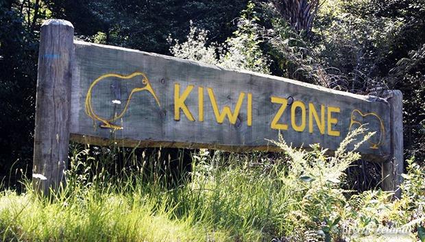 Kiwi zone Nouvelle-Zélande