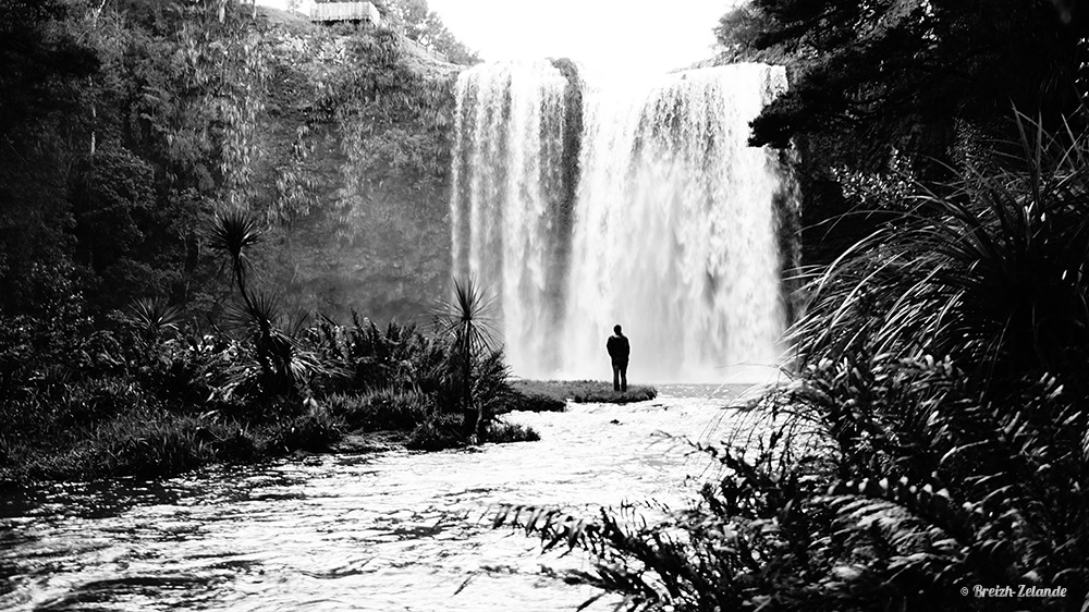 Whangarei Falls road trip nouvelle-zélande