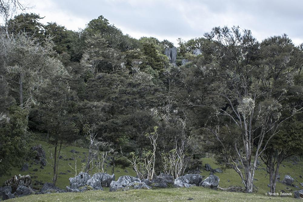 Abbay Cave Whangarei Road trip