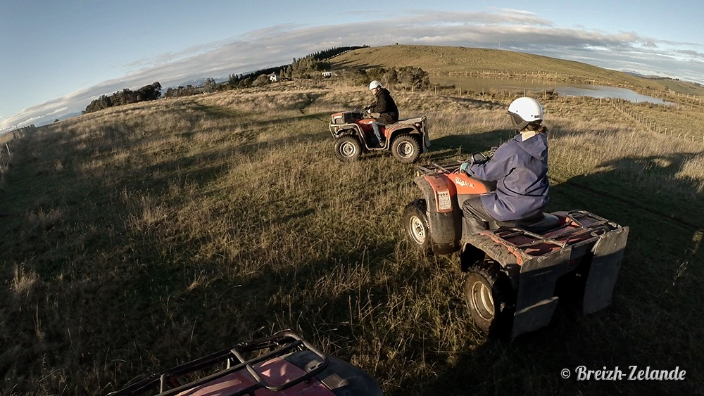quad westray farm te anau